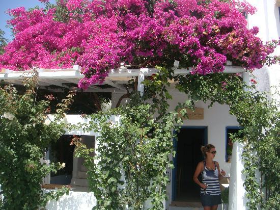 Eva's Garden: entrance