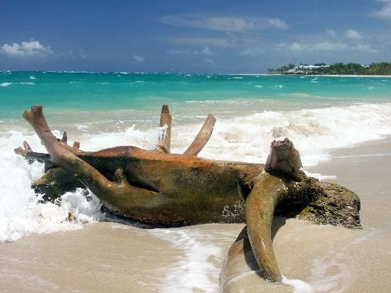 The Beach Amp Ocean Picture Of Iberostar Costa Dorada