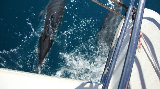 Kipara Tropical Rainforest Retreat: Dolphin escourt