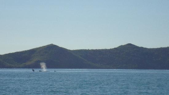 Kipara Tropical Rainforest Retreat: Whales