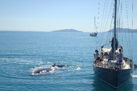 Airlie Beach Lagoon: Whale Watching