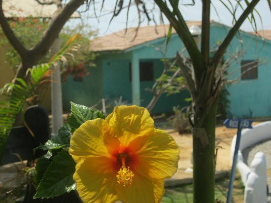 Pousada Lua Morena : View from a Tropical Garden