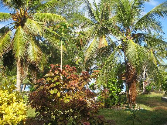 Funafuti, Tuvalu: The garden