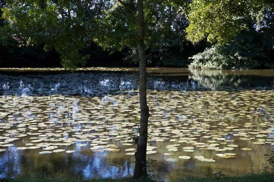 Chateau de l'Epinay: nenufares en la finca del chauteu