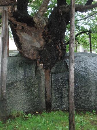 Morioka, Japan: 石の割れ目