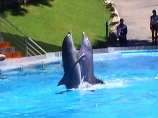 Alfagar II Aparthotel: dolphin show a must see