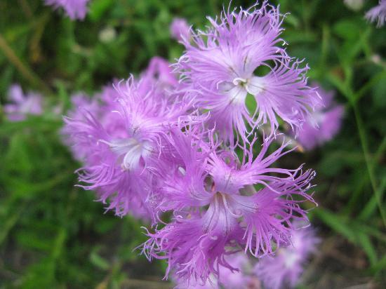 Wakka Genseikaen : さまざまな花が咲いています。