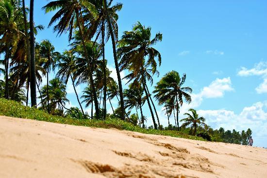 Ogum Marinho: Praia do Forte