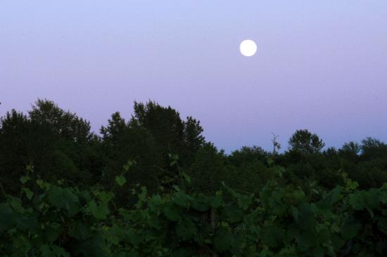 Langley City, Kanada: Edge of vineyard with full moon from Bacchus Bistro deck