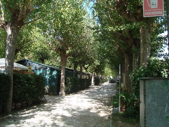 Camping La Pineta: Il viale alberato