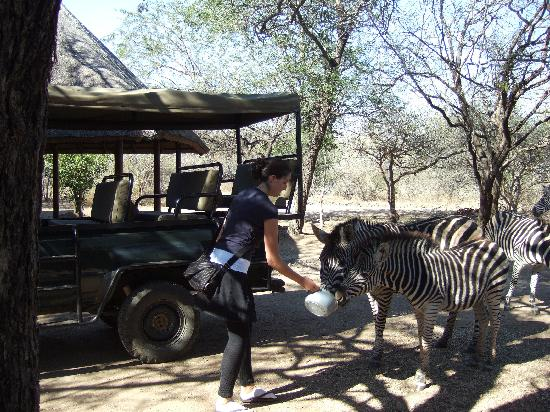 Marloth Park, África do Sul: zebras