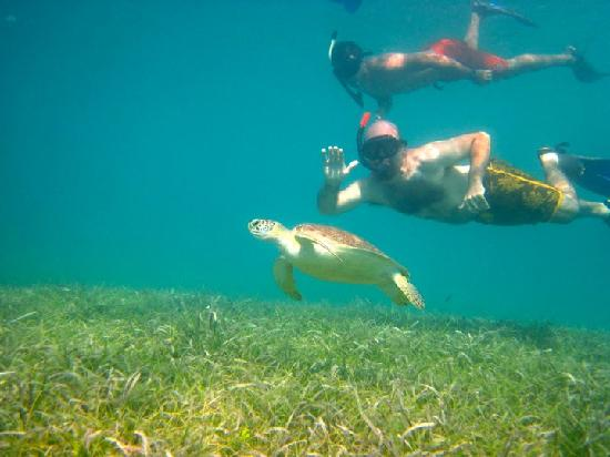 Kayaking Puerto Rico: That's me and another snorkeler with a sea turtle!  The guide coordinated dives so that we could