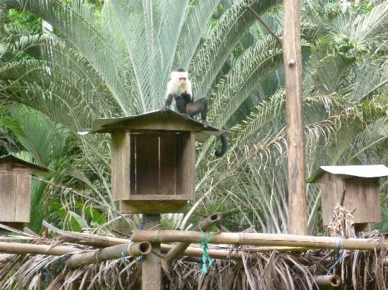 Tree of Life Wildlife Rescue Center and Botanical Gardens照片