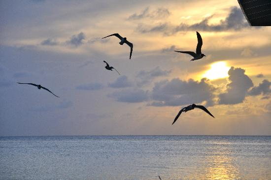 Halcyon Cove by Rex Resorts: the birds fly away into the sunset