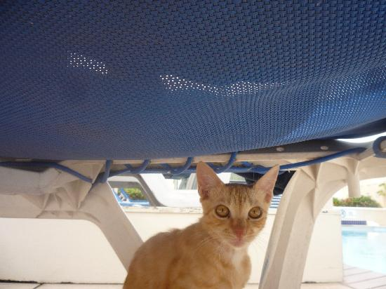 Village Inn & Spa at Rodney Bay: Mike the Hotel Cat