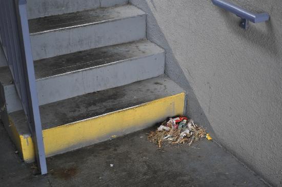 Howard Johnson Bristol: Cigarette butts and other debris