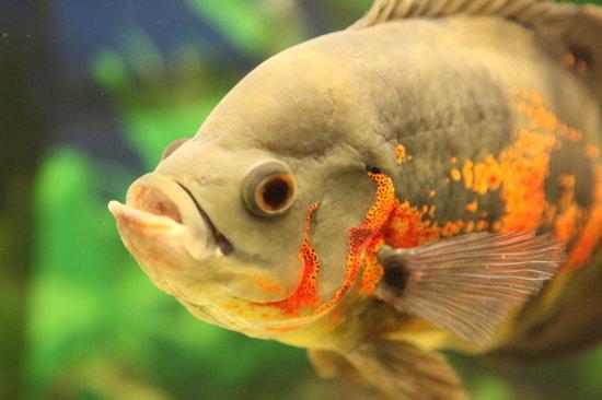 Tropiquaria Zoo: Fish