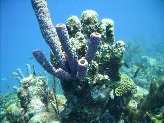 Tropical Divers: !