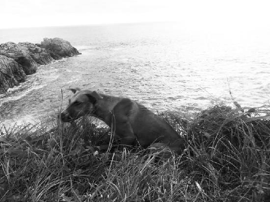 """Zipolite: Le pusimos """"Cometín"""". Este perro de Mazunte nos acompañó desde que subimos a Punta Cometa y nos"""