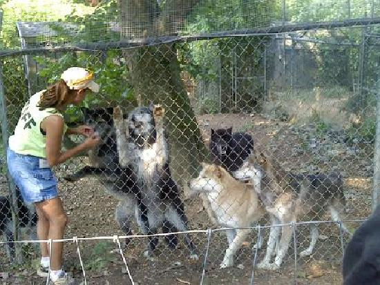 Wolf Sanctuary of PA: Mandy our tour guide feeding the wolves