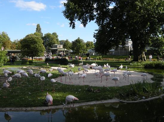 Wilhelma Zoo and Botanical Garden: Welhelma flamingos
