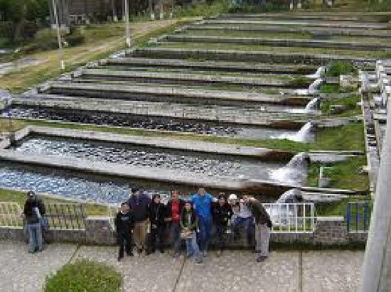El Valle del Mantaro: Criadero de Truchas de Ingenio -  Concepción