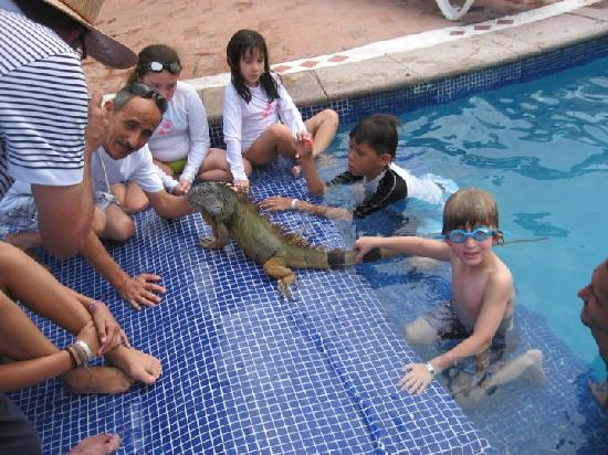 Velas Vallarta: There's an Iguana in the Pool!