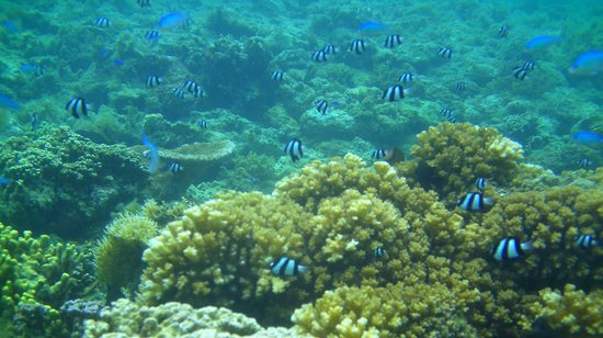 Apia, Samoa: Under water world at Palolo Deep Marine Reserve