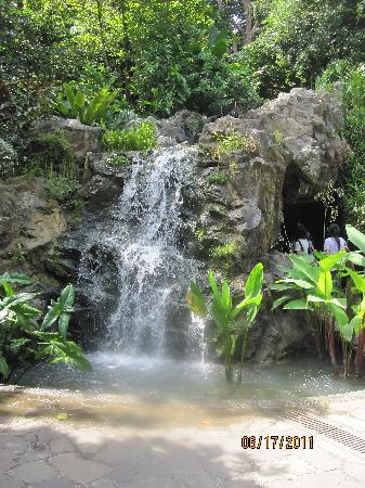 Singapore Botanic Gardens Waterfall