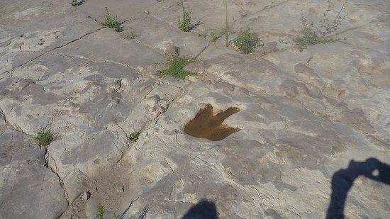 La Junta, CO: Allosaur tracks!