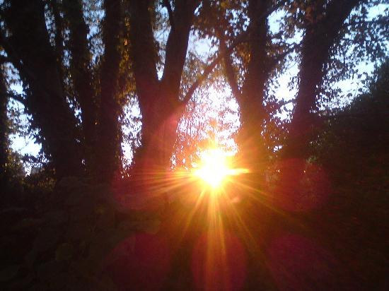 Woodlands Caravan Park: Sunset through the trees next to our tent
