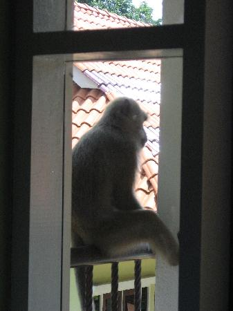 Anjungan Beach Resort : monkey on balcony