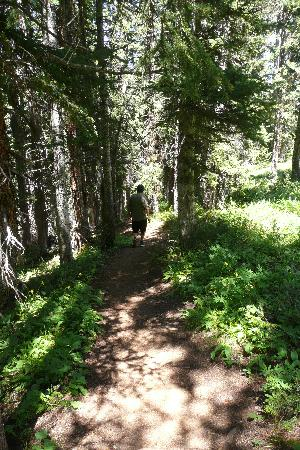 Snowmass Village Hiking Trails: nice path through the woods