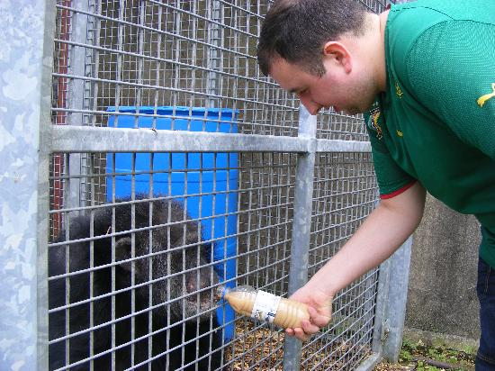 Wales Ape and Monkey Sanctuary: part of the keeper for a day jobs was giving Tubman one of the sanctuarys Chimps his morning cup