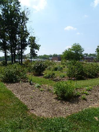 Ben Lomond Historic Site: Rose Garden