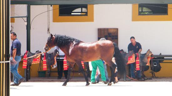 Fundación Real Escuela Andaluza del Arte Ecuestre: un des chevaux du spectacle