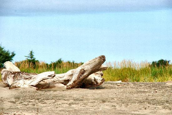 Quality Inn - Ocean Shores: Driftwood @ marina beach