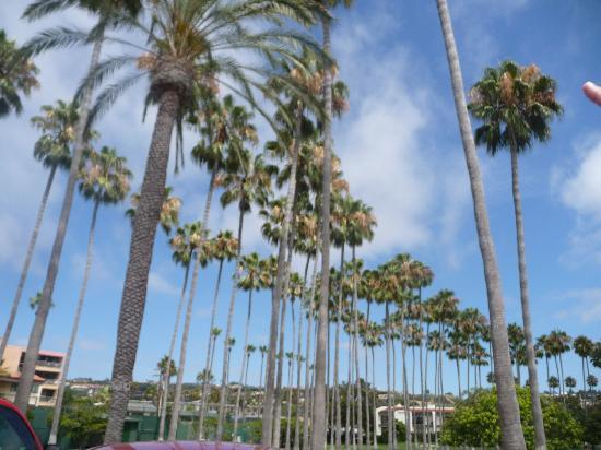 La Jolla Beach & Tennis Club: On the drive in...
