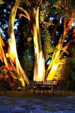 Hotel Boutique Casa de Campo: 100 year old tree msin garden