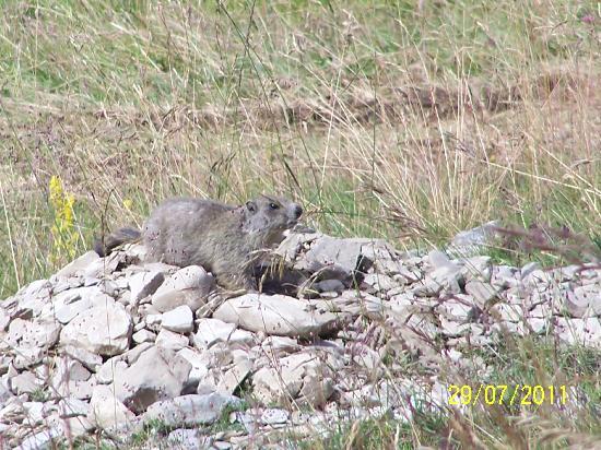 Le Domaine de L'Adoux : la marmotte