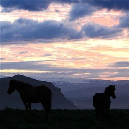 Guesthouse Vellir: horses.