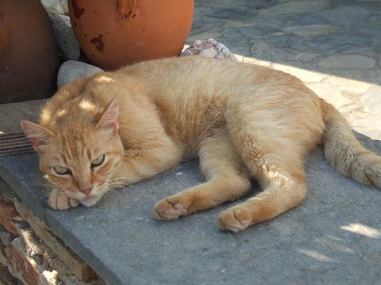 Hotel Boulis : un des chats de l'Hotel, mon copain