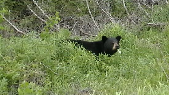 Gite du Maudit Français : ours noir