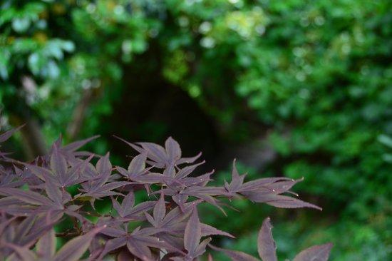 Anggardsbergens Naturreservat: bosco