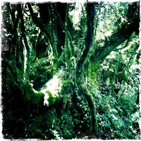 Cameron Highlands Trail No. 10: Mossy Rainforest