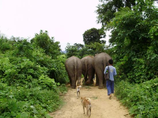 Boon Lott's Elephant Sanctuary : Out on the daily walk