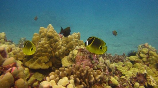 Oahu Diving: Colorful fishes!
