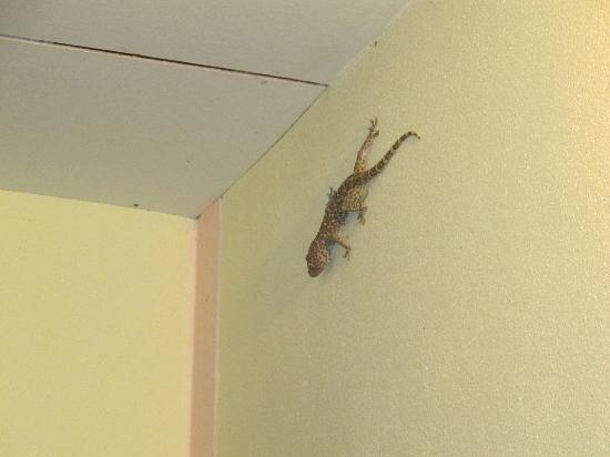 OK View Bungalows : Le gecko qui nous attendait tous les soirs au-dessus de notre porte!