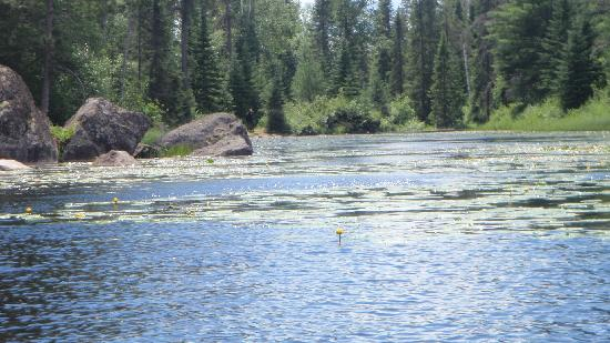 Boundary Waters Canoe Area Wilderness: Moose at the portage take-out. We'll wait...