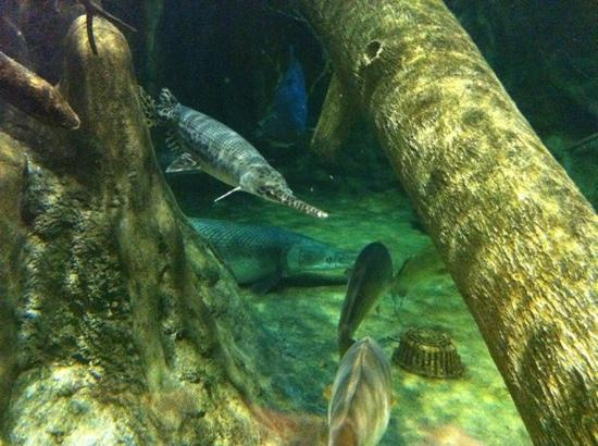 Bass Pro Shops Outdoor World: Huge Gar